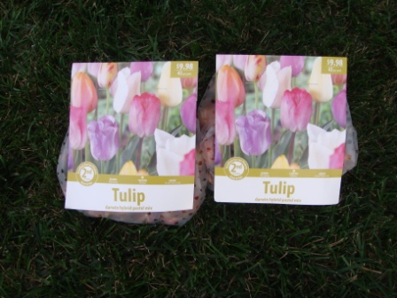 packages-of-tulip-bulbs