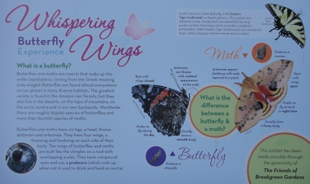 Whispering-Wings-Butterfly-Experience