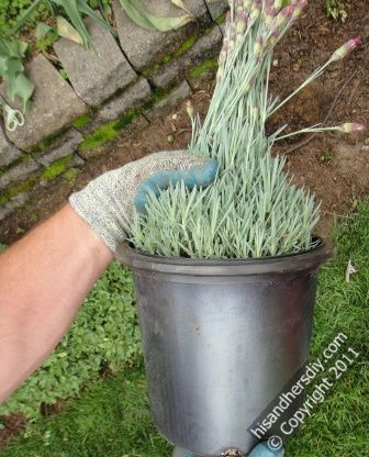 grip-foliage-to-remove-from-pot