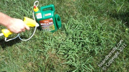 spray-directly-on-crabgrass